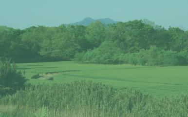 農業農村整備事業